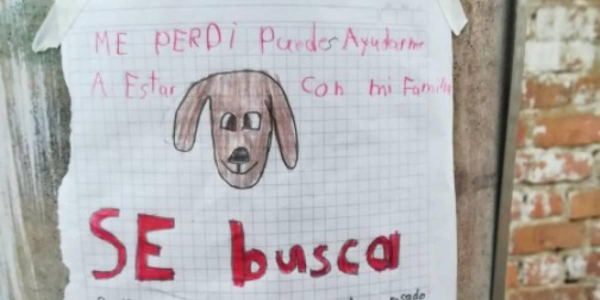 """Niño hizo notable dibujo para buscar a su perrita perdida y luego mostró una increíble bondad con la pequeña que lo """"encontró"""""""