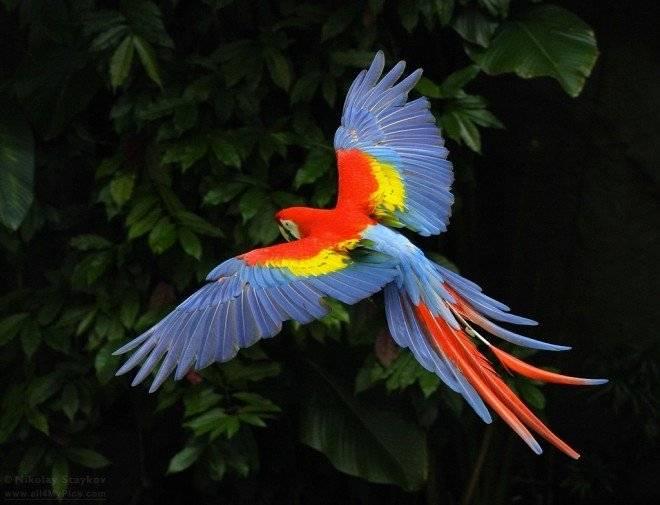 macaw3850660x505.jpg