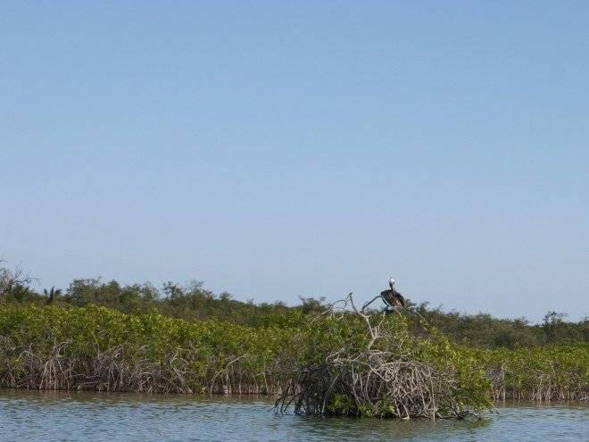 manglares660x550.jpg