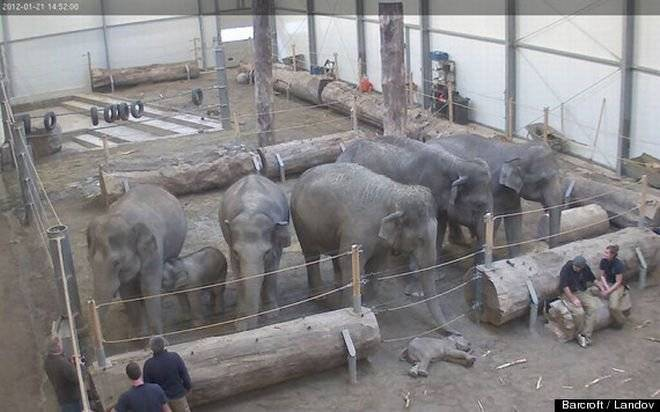 "TOUCHING IMAGE OF ELEPHANTS ""SAYING GOODBYE"" TO DEAD YOUNG"