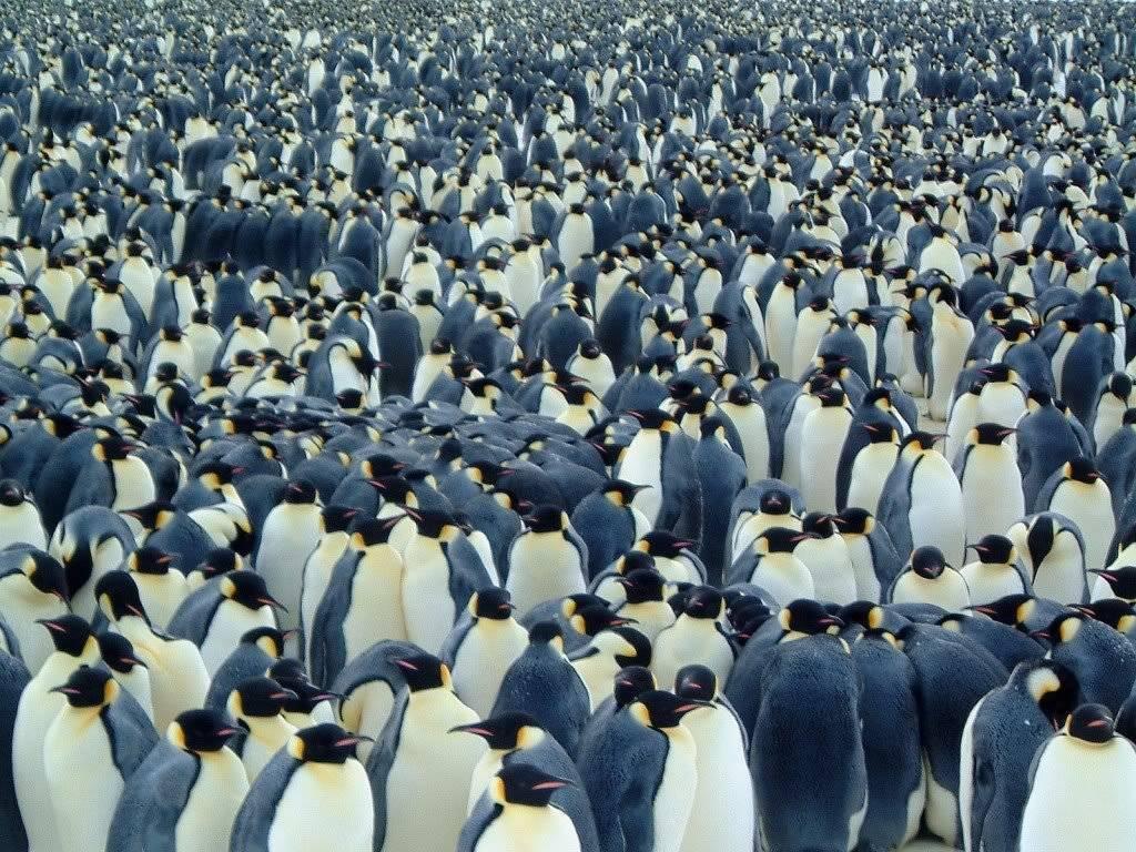 penguinswallpaper.jpg