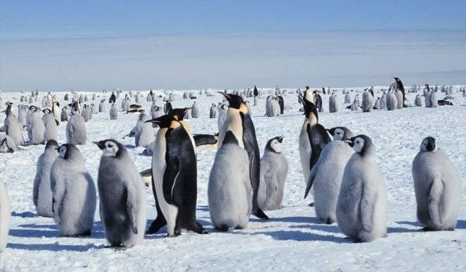 pinguinoemperadorcolonia660x550.jpg