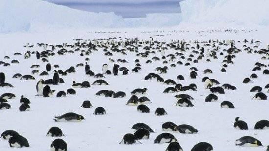 pinguinos1550x309.jpg