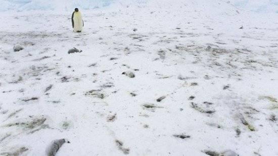 pinguinos2550x309.jpg
