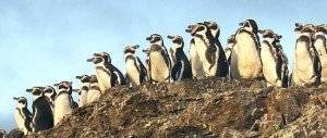 pinguinos300x300.jpg
