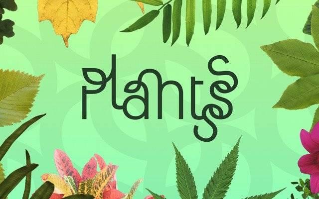 plantsss3.jpg