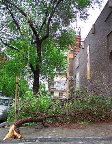 Espa a instalan 2 nuevos puntos para restos de jardiner a for Jardineria moral barcelona