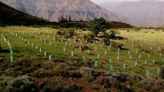 reforestacic3b3nsanjosc3a9demaipo660x550.jpg