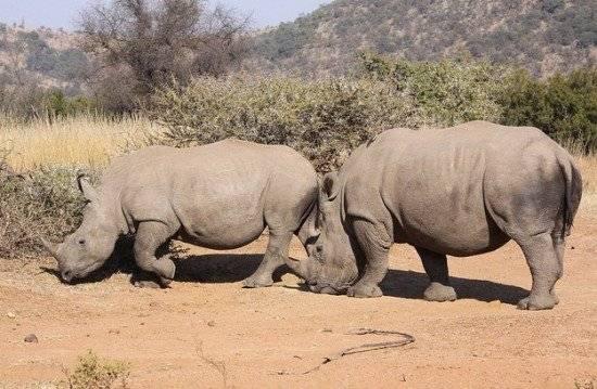 rhino550x359.jpg