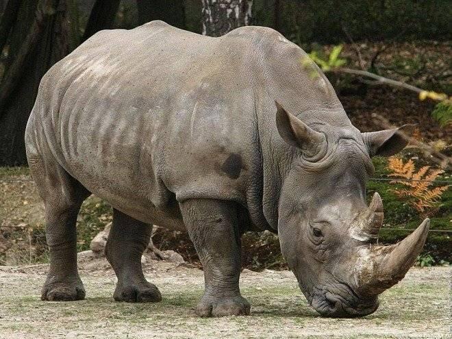 rinoceronte660x495.jpg