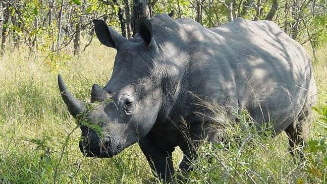 rinoceronte660x550-5.jpg