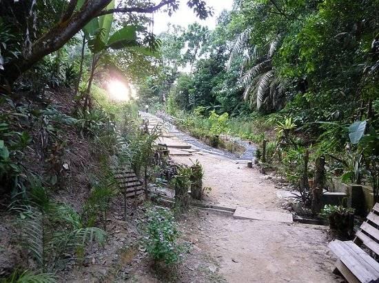 selva-3.jpg