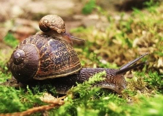 snailonsnailbestanimals.jpg