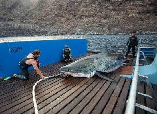 tiburon550x402.jpg
