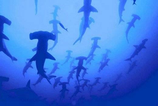 tiburonesaprendendelosotros660x550.jpg