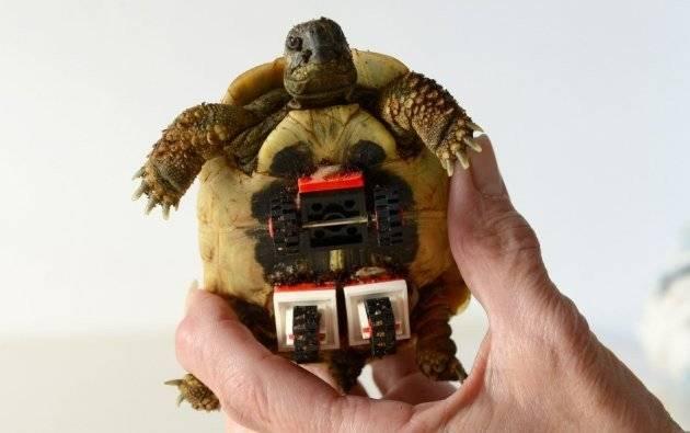 tortoiselegowheelchair2660x550.jpg