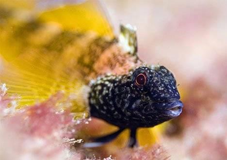 underwaterfishprize.jpg
