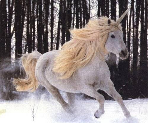 unicorniorubio.jpg
