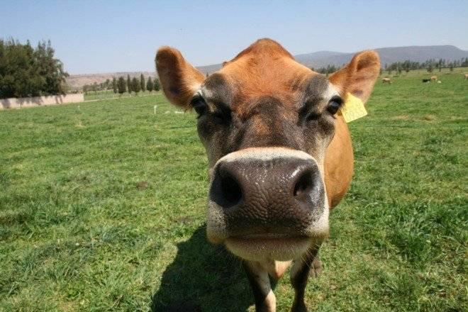 vaca1660x550.jpg