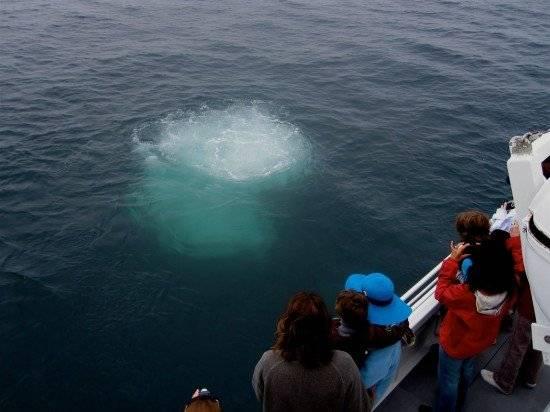 whale2550x412.jpg