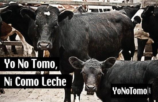yonotomo550x355.jpg