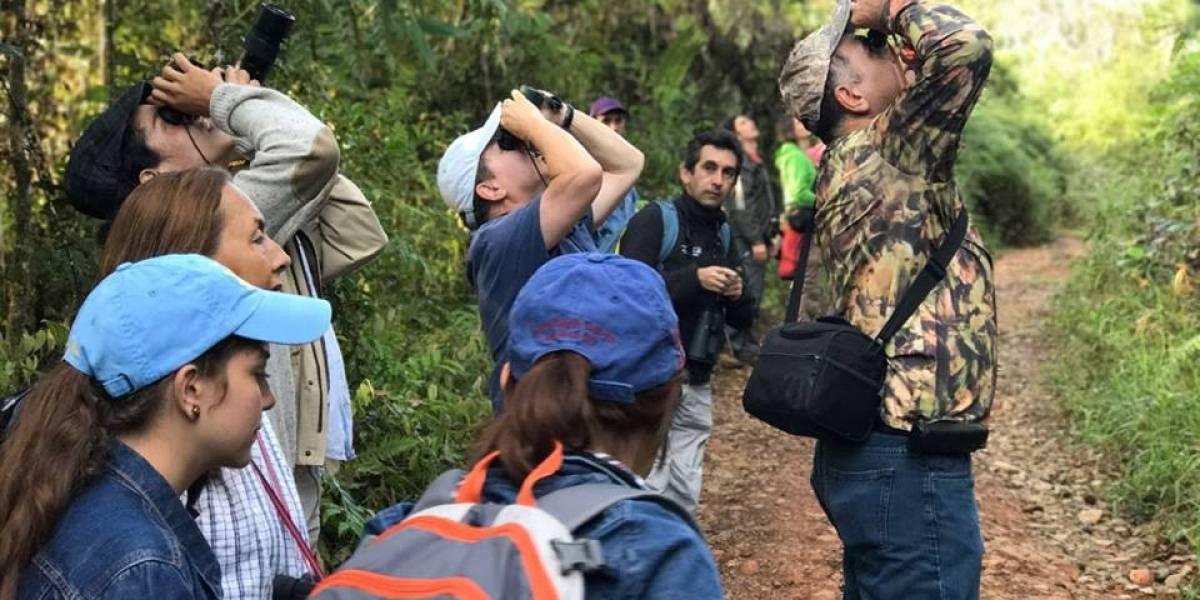 ¡A ver aves!, este viernes inicia Colombia BirdFair 2018