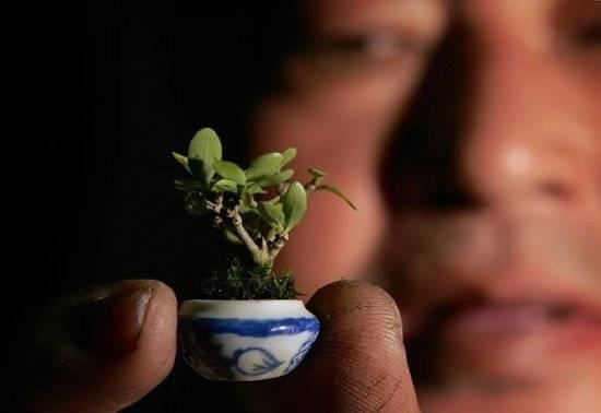 bonsai6550x378.jpg