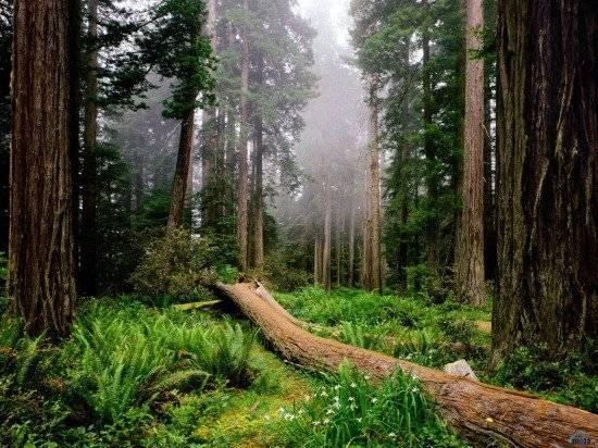 bosque1600x12001550x412.jpg