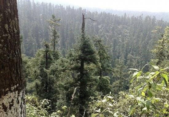 bosquesss550x381.jpg