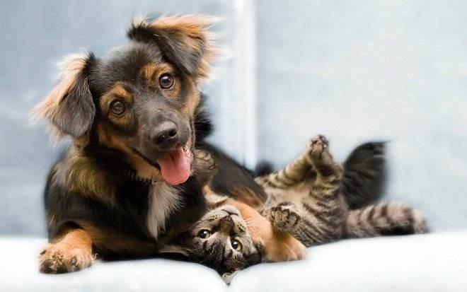 catsanddogsinlovewallpaperpicturesofcatsanddogsplayingfunnypicturestumblrquotesawesome.jpg