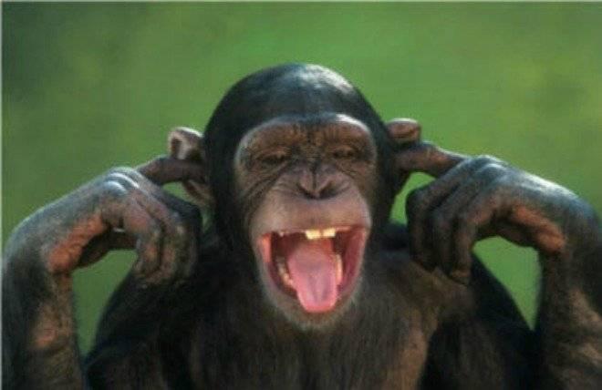 chimpcoveringears.jpg