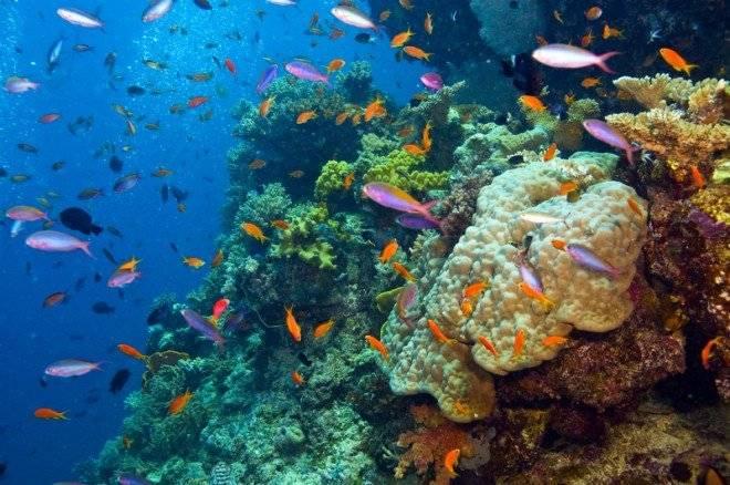 corales660x550.jpg