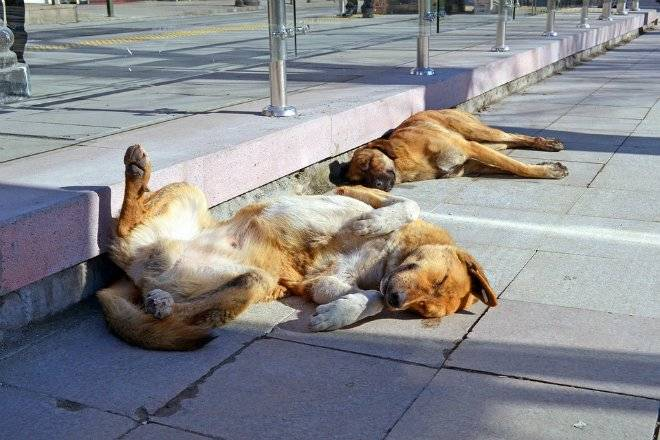 dogs1146781960720.jpg
