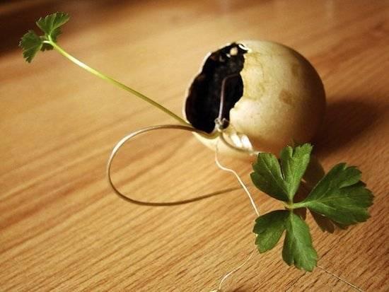 eggshellcontainergarden.jpg