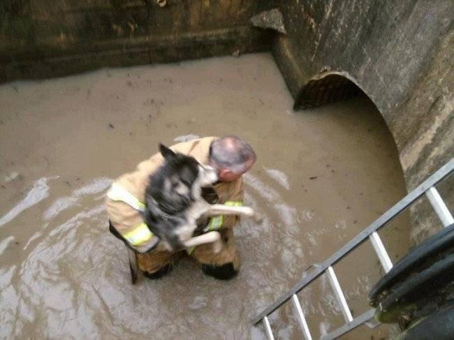 firefightersavesdogfromhurricanesandywaterse1351659058579.jpg