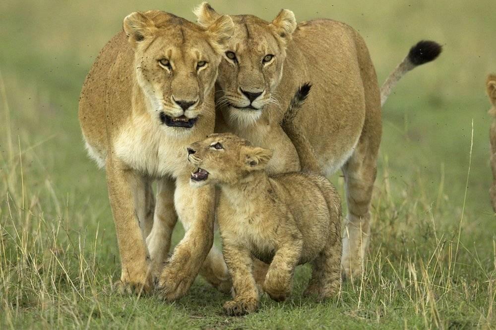 leonas.jpg