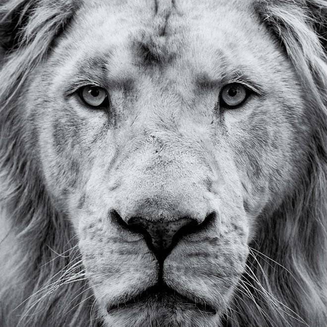 lioneltinchant.jpg
