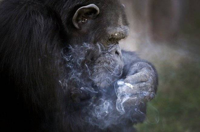northkoreasmokingchimp4660x550.jpg