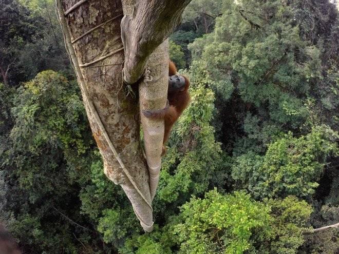 orangutans.adapt.1900.1660x550.jpg