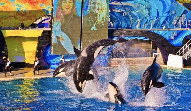 orcasseaworldsandiego660x550.jpg