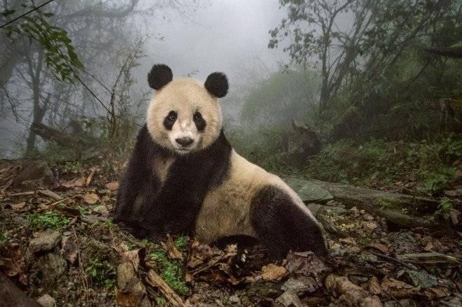 panda.adapt.1190.1660x550.jpg