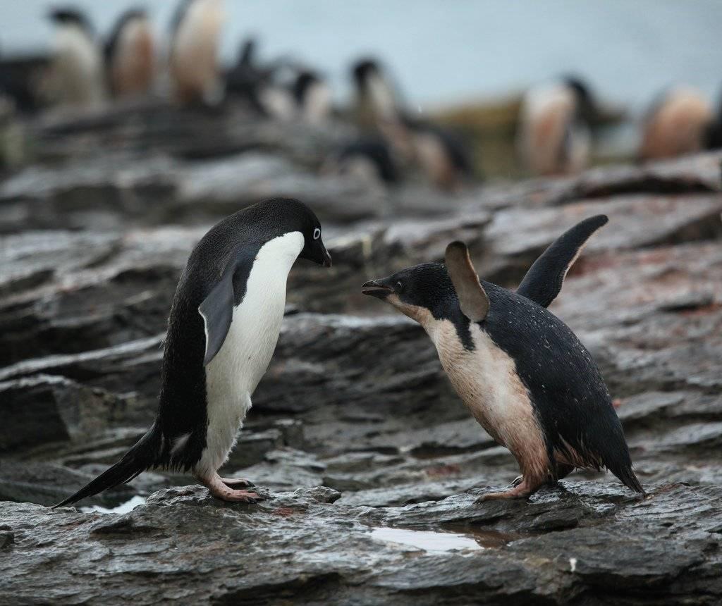 pinguinos2.jpg