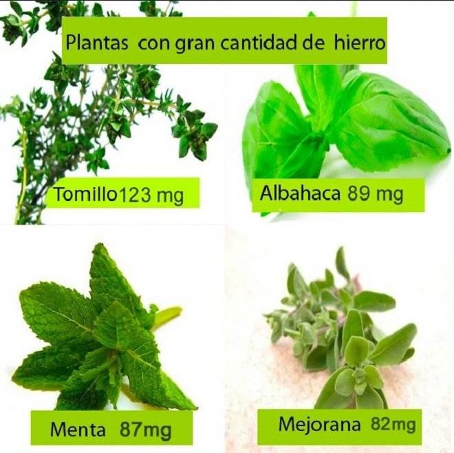 plantasconhierro.jpg