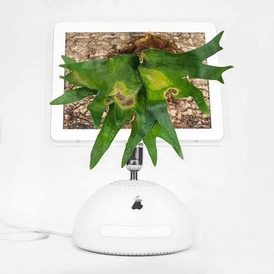 plantyoumacimaceriummonsieurplant20164660x550.jpg