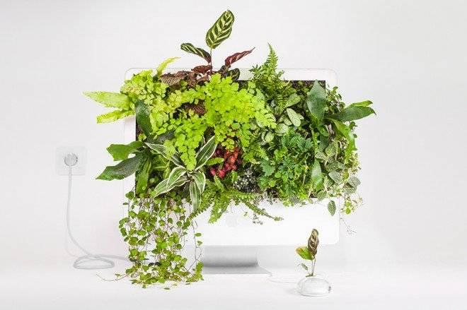 plantyourmacimacwallplantmonsieurplant20162660x550.jpg