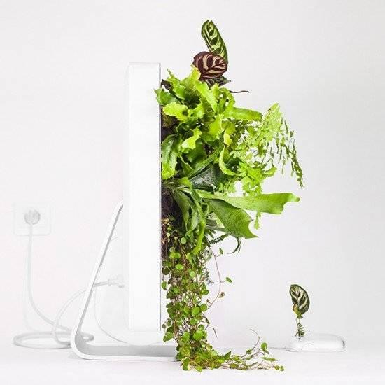 plantyourmacimacwallplantmonsieurplant20163instagram660x550.jpg