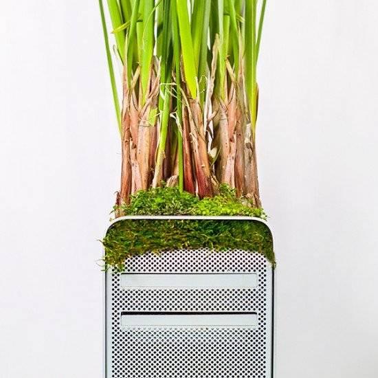 plantyourmacmacpyrusmonsieurplant20162instagram660x550.jpg