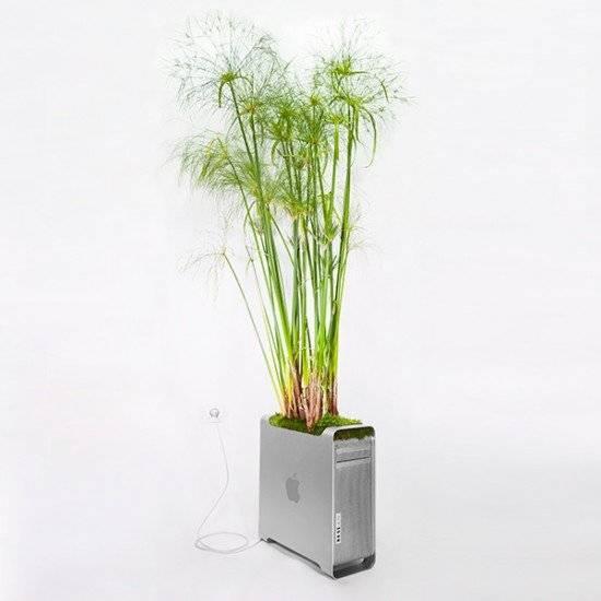plantyourmacmacpyrusmonsieurplant20164okinstagram660x550.jpg