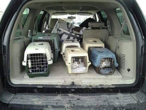 rescueinkcatsevacuated.jpg