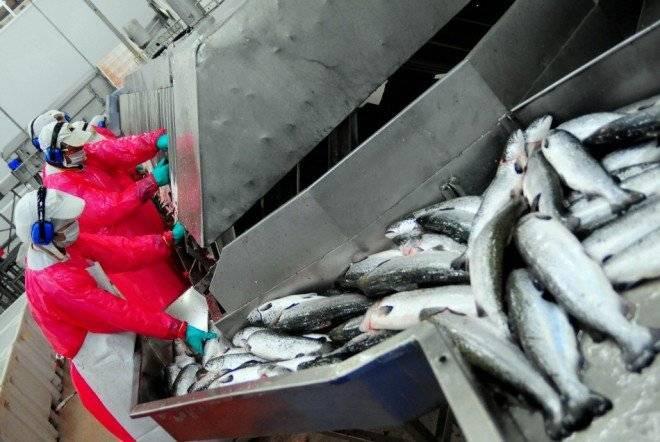 salmon660x550.jpg